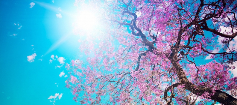 Spring is here! It's time for your Spring Start-up
